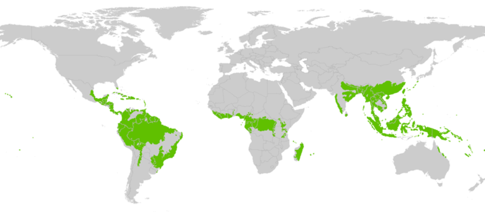 Tropical rainforest, world map