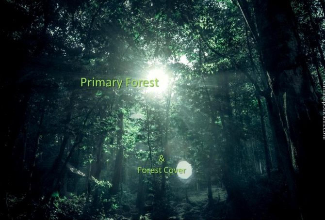 Forest Cover and Primary Forests 1990-2015 (two country groups are examined)