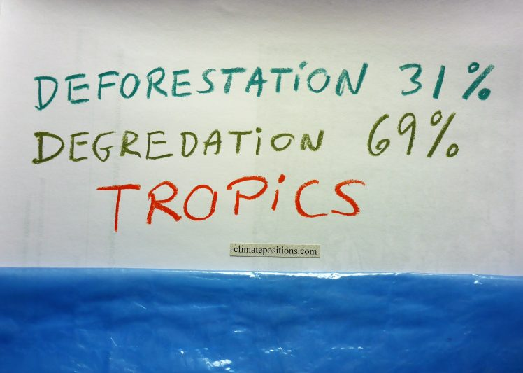 Study: Tropical forests now release twice as much carbon than they absorb
